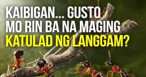 The Way of the Ant by Coach Raffy Calicdan